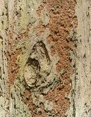 Orange Termite Nest  On Brown Tree Bark