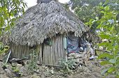 A habitation of a Maya family