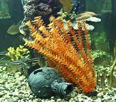 Corals, Algae And Jug, Aquarium