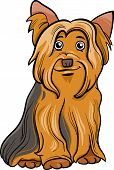 Yorkshire Terrier Dog Cartoon Illustration