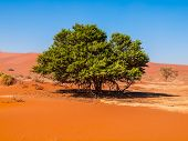 Lonesome Green Tree In The Desert