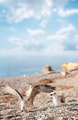 Seagulls on the beach. Focus on right bird. Shallow DOF.