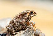 Beautiful Photos Toad