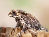 image of exotic frog  - photo portrait of an exotic tropical frogs  - JPG