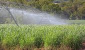 Sugar Cane Irrigation