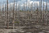 Lifeless Desert Landscape Of Kamchatka: Dead Wood (tolbachik Volcano Lava Field)