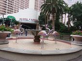 Pink Flamingos In Fountain At Flamingo Hotel