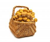Fresh Mushrooms In A Wicker Basket Isolated On White Background Close-up