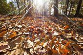 Autumn Forest In Thailand