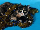 Tricolor Cat Wrapped Christmas Garland Lies On Blue