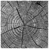 image of cutting board  - vector natural illustration of engraving saw cut tree trunk - JPG