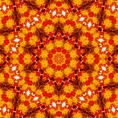 Pattern Of Macro Marigold Flower