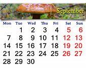 Calendar For September Of 2015 With Mushroom