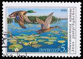 Series Wild Birds