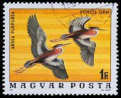 Series Birds