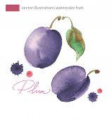 Vector illustration of purple plum with leaf.