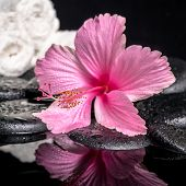 Spa Concept Of Delicate Pink Hibiscus  With Drops And White Stacked Towels On Zen Stones In Reflecti
