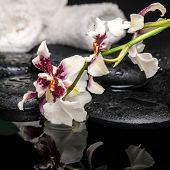 Healthcare Concept Of Orchid Cambria Flower With Drops And White Towels On Zen Stones In Water, Clos