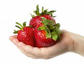 Three Strawberries In The Hand