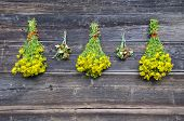 Wild Strawberry And St. Johns Wort Medical Herbs On Wall