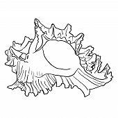 pic of beach shell art  - Marine hand drawn shell - JPG