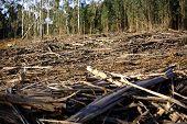 foto of deforestation  - Deforestation scene - JPG