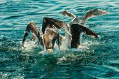stock photo of water animal  - Animals nature and action - JPG
