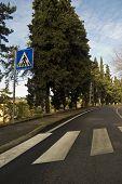 Tiro de ângulo baixo de zebra cross, com árvores, forro da estrada.