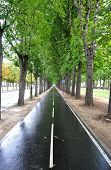 Cycle lane after the rain