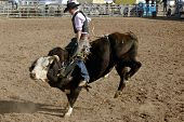 APACHE JUNCTION, AZ - FEBRUARY 28: A competitor rides a bucking bull in the bull riding competition