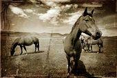 Antique Western Horse
