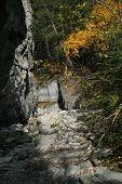 Narrow Canyon With Fall Trees