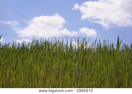 poster of Fluffy Grass