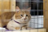 Lonely Red White Cat Looking With Hope From Lattice Of Cell, And Waiting For Owner With Home. Concep poster