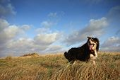 A Border Collie In Long Grass