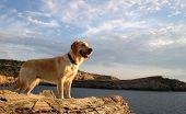 Dog Watching The Sea