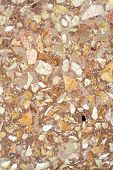 picture of terrazzo  - Detail of Terrazzo paving  - JPG