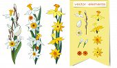 Set Of Vector Hand Drawn Floral Elements Isolated On A White Background. Narcissus. Pussy-willow Bra poster