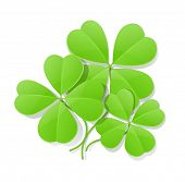 clover four leaf for saint patrick's day vector illustration isolated on white background EPS10. Tra