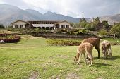 stock photo of hacienda  - Hacienda in the Sacred Valley of the Incas - JPG