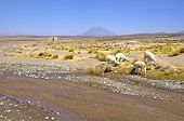 The vulcan El Misti, Peru