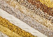 striped rows of dry groats , couscous, bulgur, grain ,cereal,buckwheat, rice, backdrop