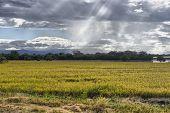 Amazing Beams Of Sunlight On Crops