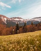 Lively Colors In Spring Mountain Tops View Snowy Mountain Tops View Sky Meadow Forest Clarity Freedo poster
