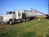 Loading Grain Truck