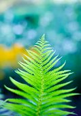 Fern branch close-up, shallow depth of field shot with magic colors and bokeh