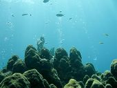 Underwater Reef And Sea Life