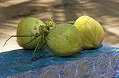 freshly harvested coconuts