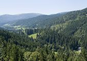 Idyllic Black Forest Scenery