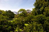 image of royal botanic gardens  - This image shows a vista within the Royal Botanical Gardens  - JPG